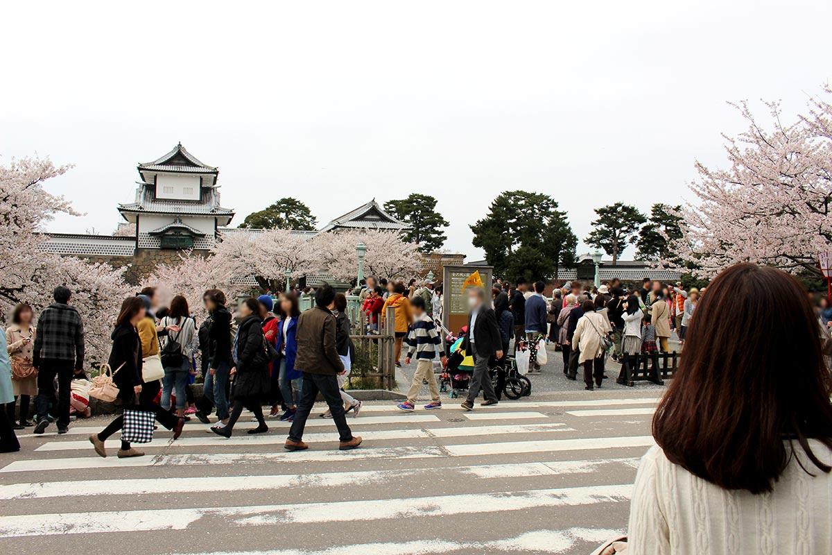 金沢城公園 桜