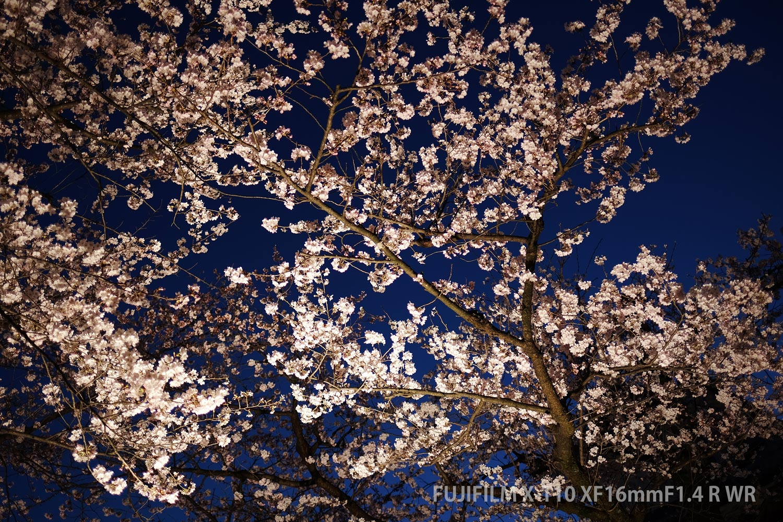 金沢城と夜桜
