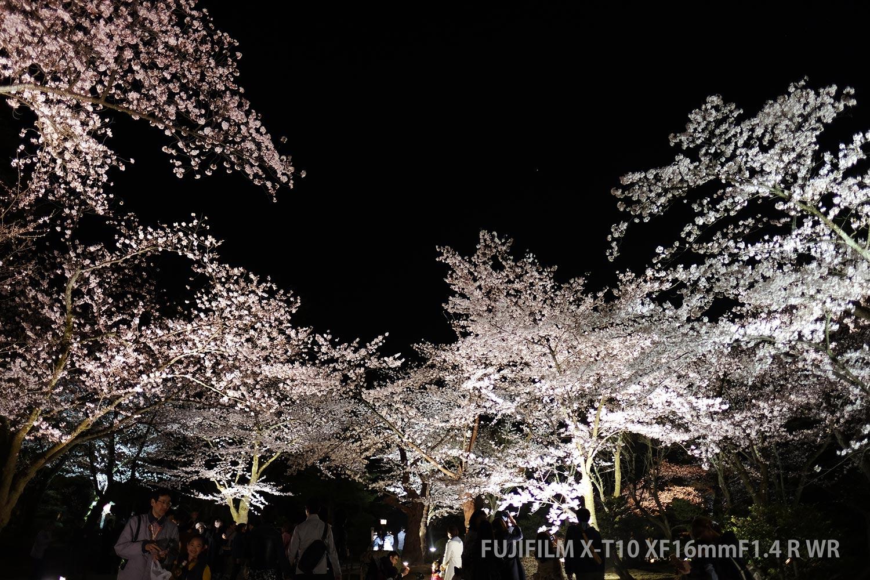 兼六園の夜桜
