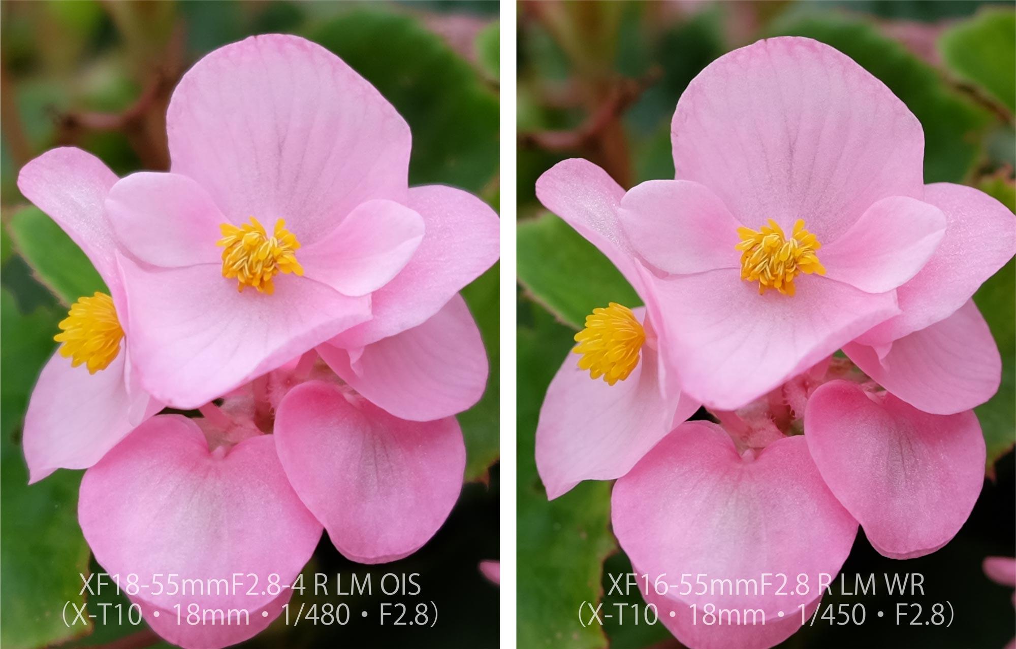 XF18-55 XF16-55 X-T10 お花1