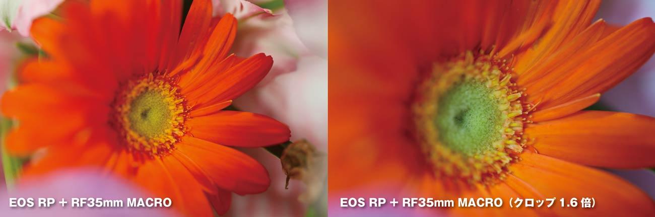 EOS RP + RF35mm MACRO クロップモード