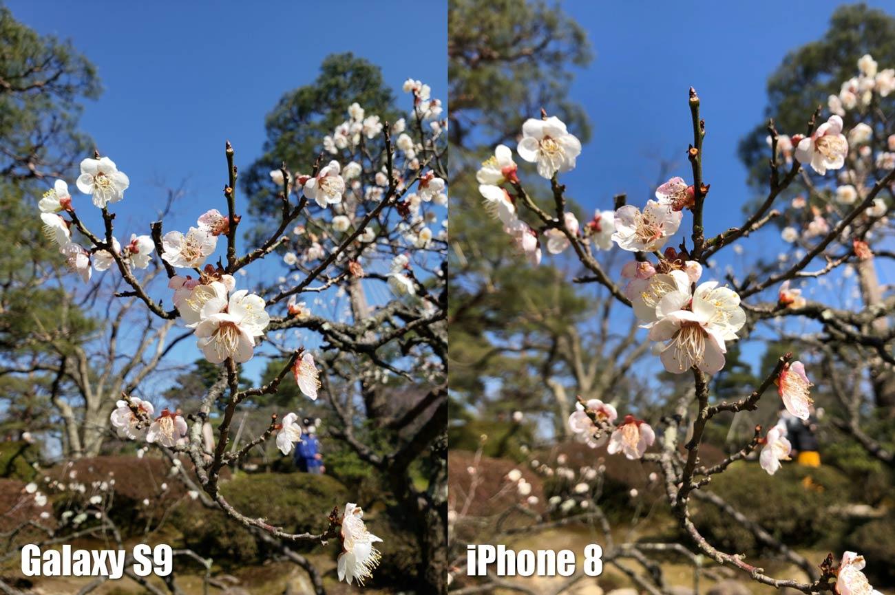 Galaxy S9とiPhone 8 リアカメラの画質比較(桜の花)