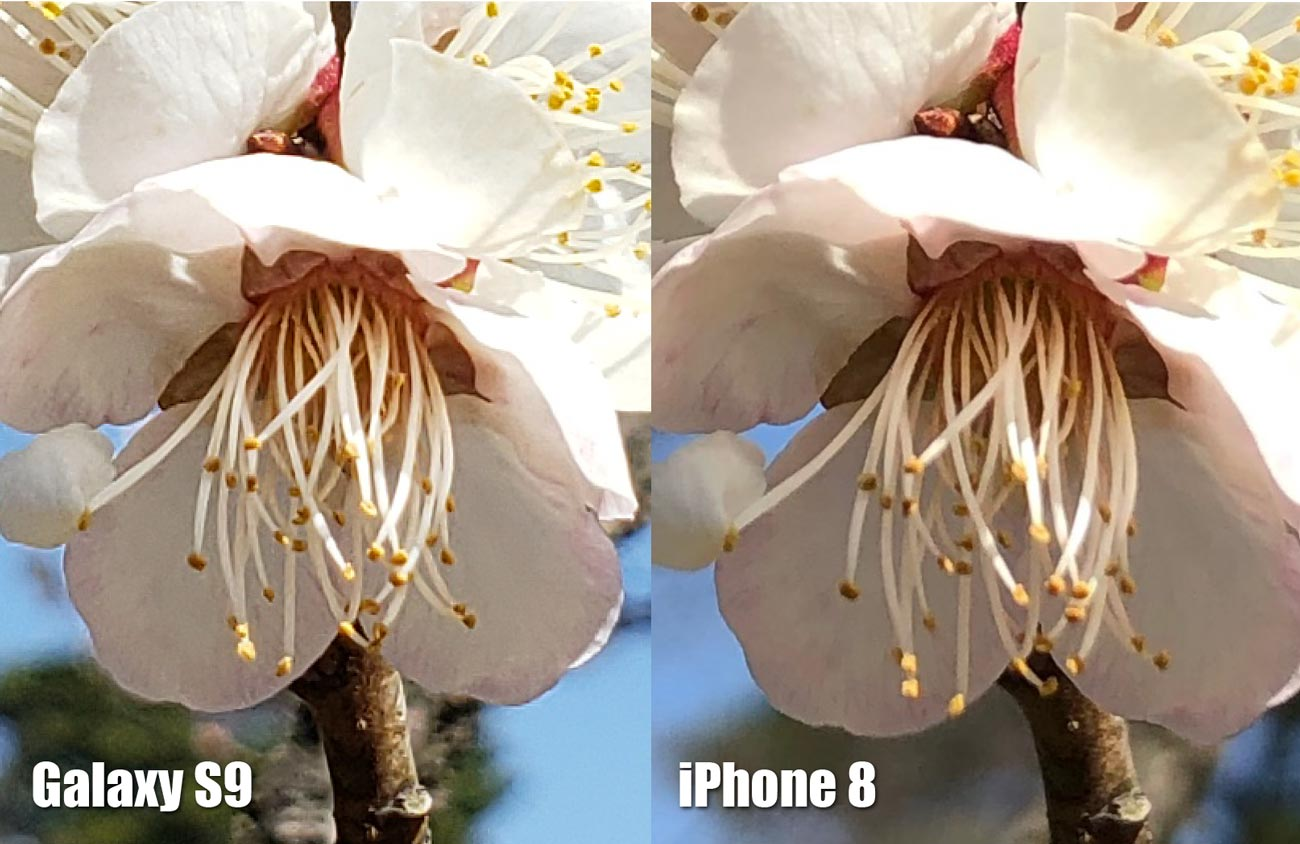 Galaxy S9とiPhone 8 リアカメラの画質比較(桜の花 拡大)