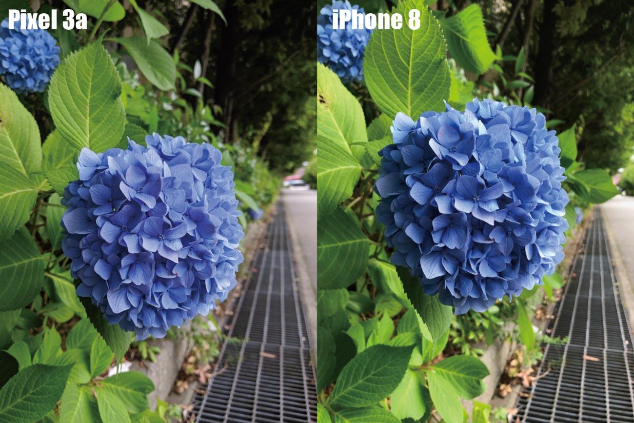 Pixel 3aとiPhone 8 リアカメラの画質比較(紫陽花)