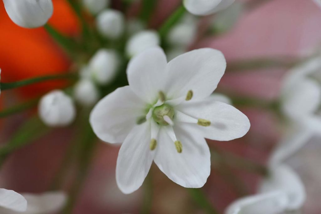花の接写(EOS RP + RF35mm F1.8 MACRO)