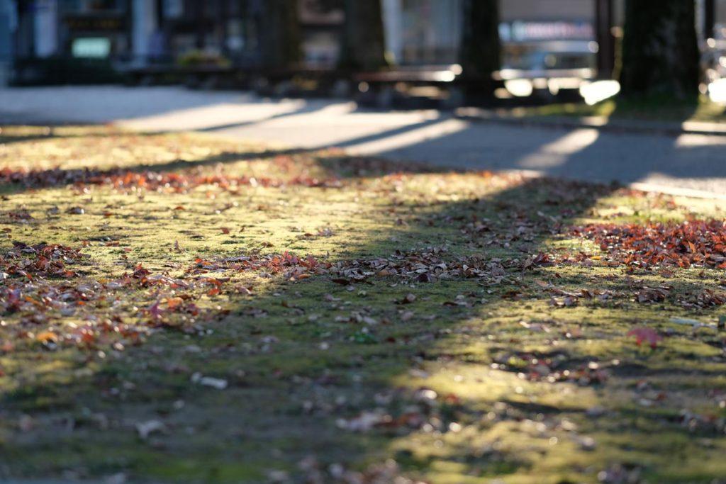 XF90mmF2で木々の影を撮影