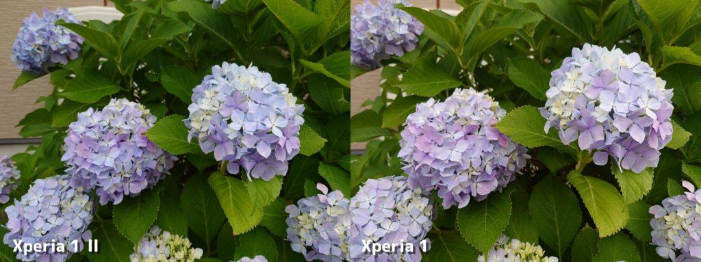 Xperia 1 Ⅱ・Xperia 1 標準カメラの画質比較(紫陽花)