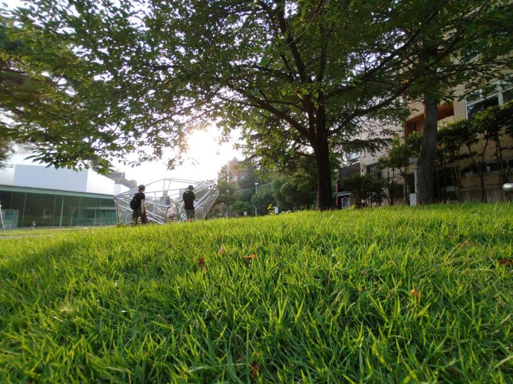arrows 5Gの超広角カメラで草むらを撮影