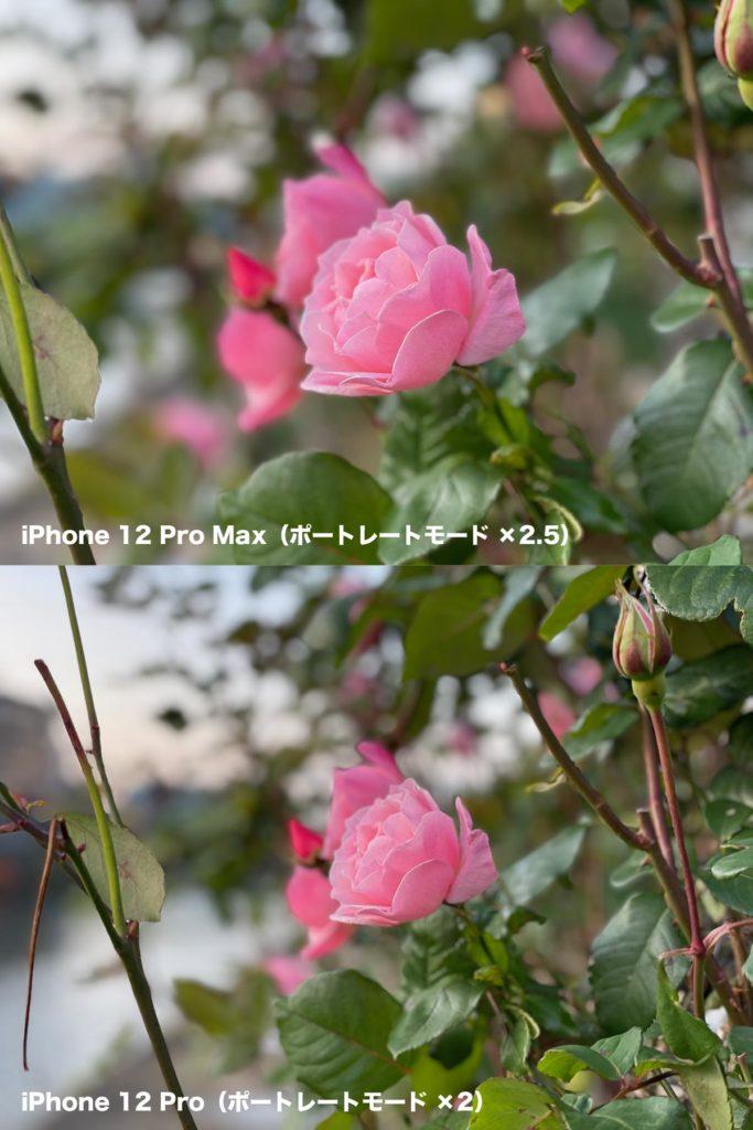 iPhone 12 Pro MaxとiPhone 12 Proのポートレートモード比較
